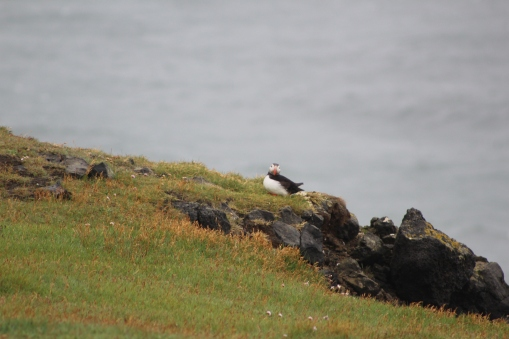 This puffin stared right at us